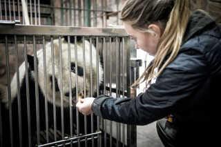 Pernille var med i Kina for at hente de to pandaer hjem til København. Her træner hun med Xing Er før afgangen.