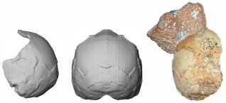 Til højre ses de fossile rester af det 210.000 år gamle Homo sapiens-kranie. I midten en digital rekonstruktion af kraniet set bagfra og til venstre en digital rekonstruktion af kraniet set fra siden.