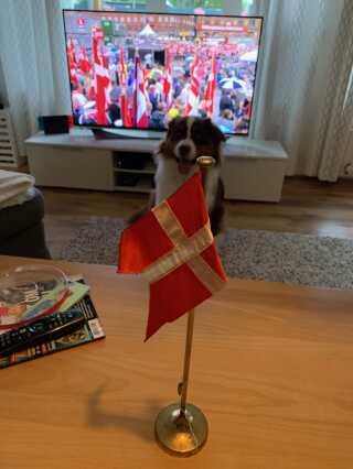 I Albertslund har familien Nielsen sat flaget frem på stuebordet indenfor, så de kan hylde flaget i tørvejr.