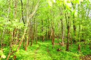 Maj måned gav skovene vitamin nok til at skyde friske skud, og de fremstod nærmest skrigende lysegrønne.