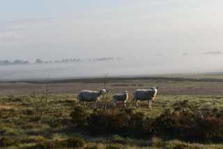 Forårsmånederne byder ofte på dis og tåge. Maj i år var ingen undtagelse - her i selskab af får fra Kjellerup.