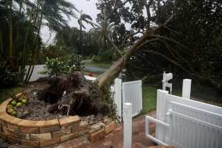 Et væltet træ i Pompano Beach, Florida.