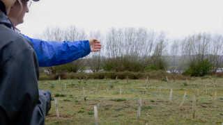 Træplantningen i Oxford er ikke helt lykkedes for Norwegian. Det skønnes, at halvdelen af træerne er gået ud siden 2017.