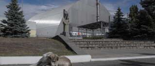 En hund slapper af foran den gigantiske metalkuppel, der dækker over den ødelagte reaktor 4 på atomkraftværket Tjernobyl.