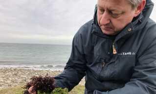 Direktør Claus Marcussen fra Dansk Tang viser tangarterne blomkålstang og havsalat. Det er især den grønne havsalat, som er efterspurgt hos restauranterne.
