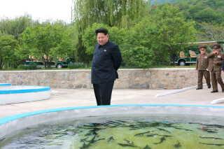 Nordkoreas leder Kim Jong-un viser sig ofte på landets fiskefarme, som i de fleste tilfælde styres af militæret.