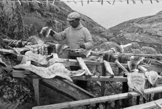Af naturlige årsager kom landbruget aldrig rigtig til Grønland. Her levede man primært af at jage og fiske. Derfor har grønlændere den dag i dag sjældent 'grøntsagsgener'.