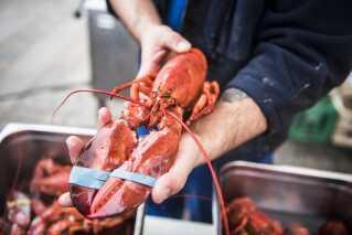 En fisker bruger i gennemsnit 6 liter diesel for at fange én hummer. Derfor er hummerens klimabelastning ifølge Fødevareministeriet mindst lige så klima-belastende som oksekød.