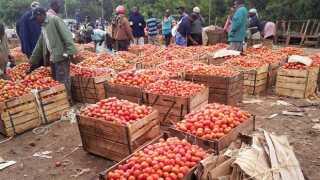Et marked i Kenyas hovedstad Nairobi bugner af tomater.