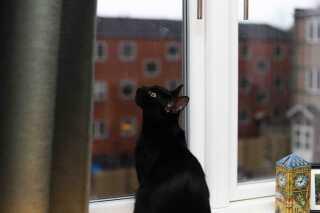 Frederikke bor ikke alene i lejligheden i Lyngby. Hun har nemlig en otte måneder gammel kat, som hun naturligvis har døbt Merlin.