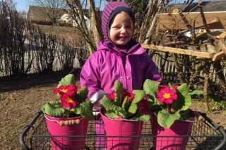 Ida på 5 år fra Stoholm i Midtjylland har meldt sig som RamasjangRedder og er ved at plante blomster ud til bierne.