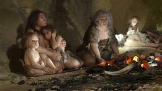 Billedet er fra en udstilling på the Neanderthal Museum, Kroatien i 2010. Det er altså den tidligere forestilling om, hvordan neandertalernes brystkasse og rygsøjle så ud.