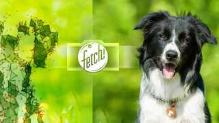 DMesh-Fetch-Illustration3-2000px.jpg