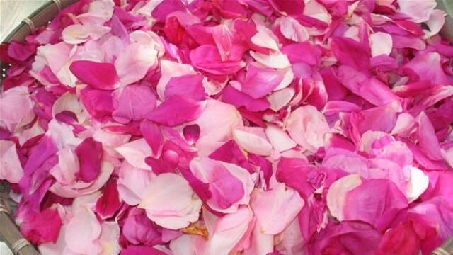 Friske rosenblade