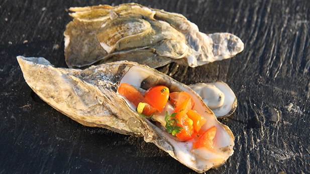 Billedet viser østers med tomatsalsa.