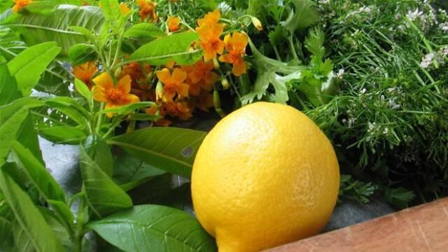 Citron til kryddersalt.