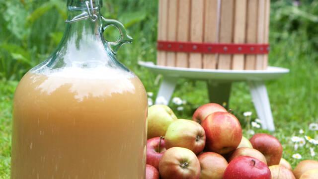 Hjemmebrygget cider i en stor glasflaske og en bunke af æbler ved siden af