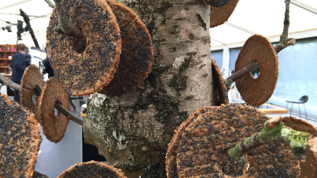 Knækbrød med birkes på træ