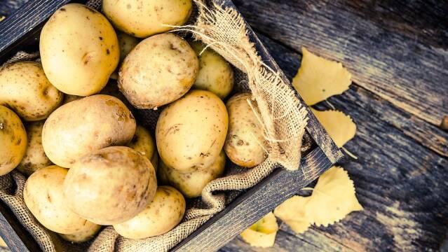 Nyopgravede kartofler i kasse