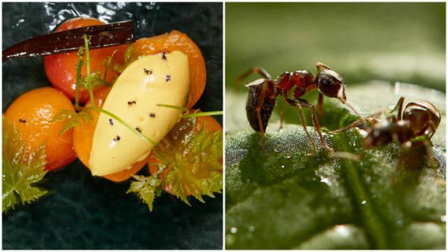 Billede af skøn mango- og passionssorbet med myrer