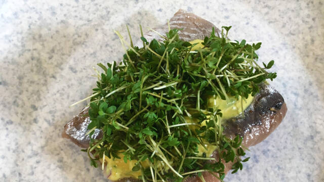 Marinedet sild på tallerken med karrysalat og karse