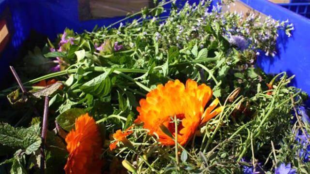 Tørrede urter og blomster