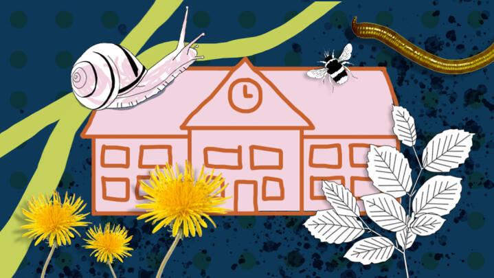 Nyt materiale fra DR Skole vil gøre det sjovere at arbejde med dyr, planter og natur