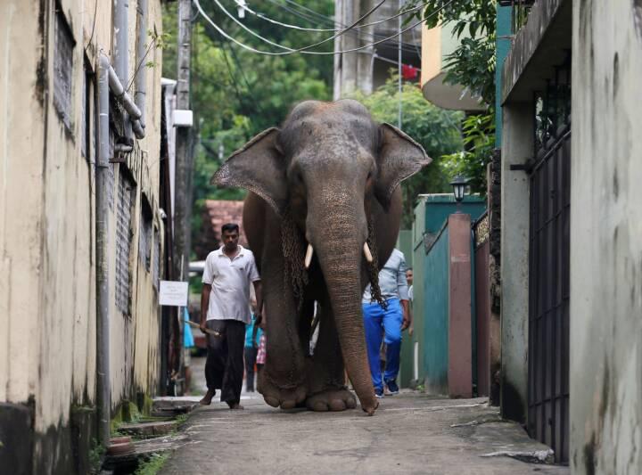 I Sri Lanka må du ikke længere sidde på elefanter, når du har drukket