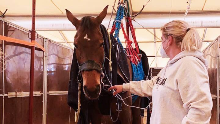 Hesteherpes hærger Europas stalde: Magtesløs dansk familie fanget i epicentret ved ridestævne