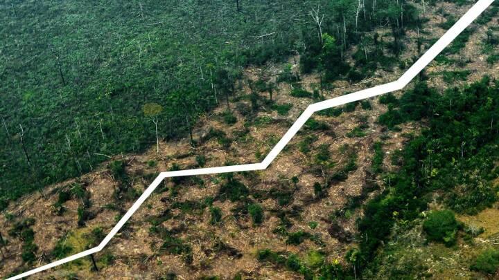 Præsidenter, medier og astronauter står i kø for at snakke Amazonas: Her er noget af det, de har misforstået