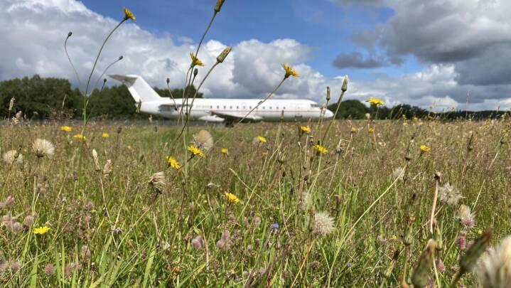 Når flyet letter i Billund, kan du se ned på vilde blomster: Naturen trives overraskende steder