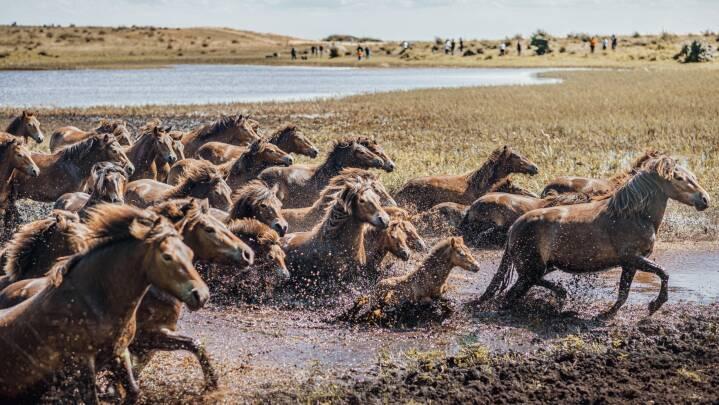 Træt af at gå den samme tur? Her er 27 billeder fra steder, du kan opleve i den danske natur