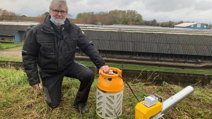 Måger kan være skyld i coronasmitte på minkfarme: Jan bruger gaskanoner til at holde dem væk