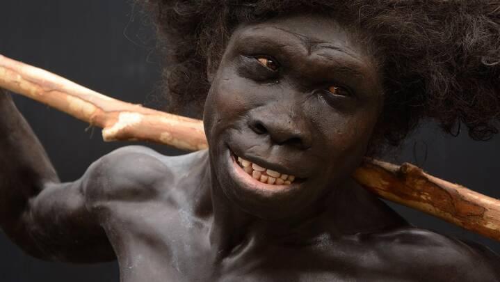 De første mennesker var overraskende kloge: Værktøj er 700.000 år ældre, end vi troede