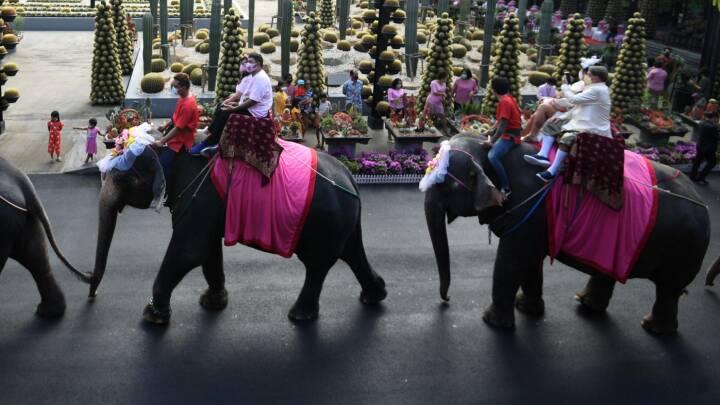 Valentinsdag i en coronaverden: Visir-vielser, protester og kærlighed på elefantryg