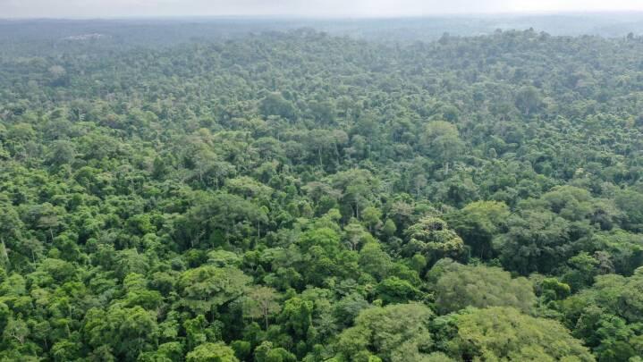 Afrikanske regnskove optog masser af CO2 trods tørkerekord