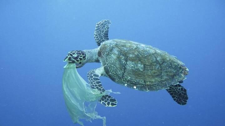 Forsker: 'Hvis plastik blev opfundet i dag, ville det ikke blive tilladt'