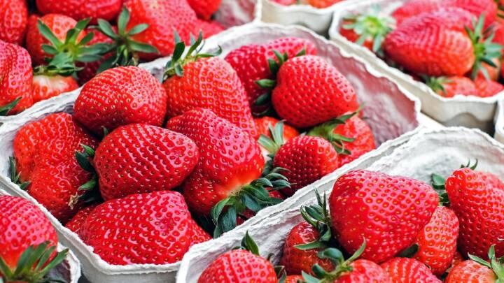 Er danske jordbær bedst?! Ekspert afgør sejlivet diskussion