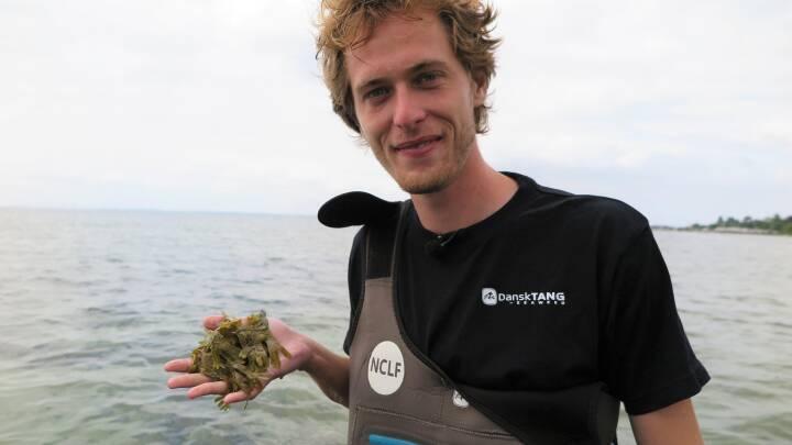 Noma er ikke nok: Simon høster havets grøntsager, og de skal også på din tallerken