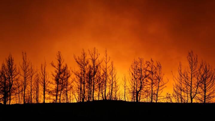 Det sydlige Tyrkiet i flammer: Tre meldes dræbt i skovbrande