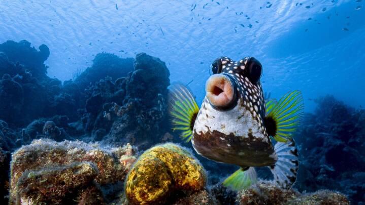 Fisk med filler-læber og en Beyoncé-bjørn: Her er ni af årets sjoveste dyrebilleder