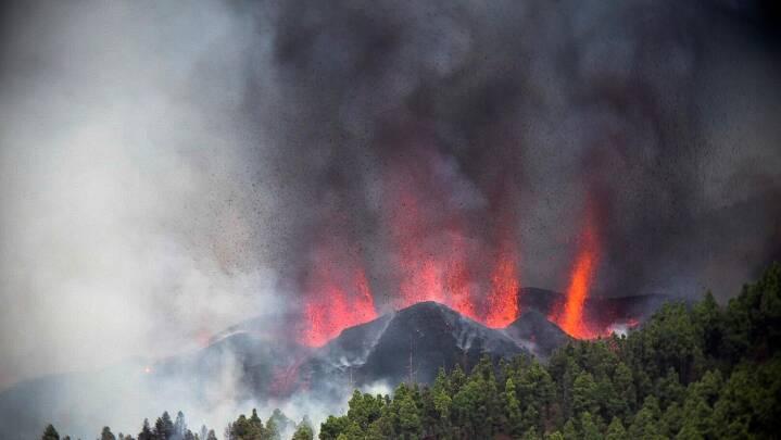 Se videoen: For første gang i 50 år sprøjter lavaen op på La Palma