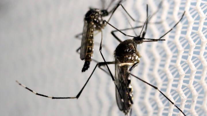 USA vil bruge milliarder på at bekæmpe zika