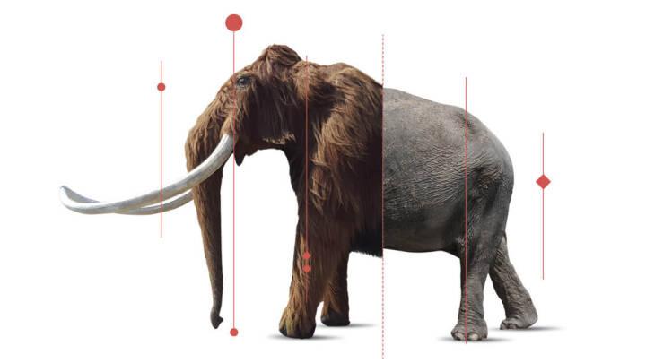 Drømmer du om at klappe en levende mammut? Du skal (nok) kun vente ti år