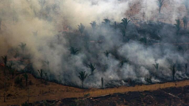 Brasilien forbyder afbrænding i Amazonas i 60 dage