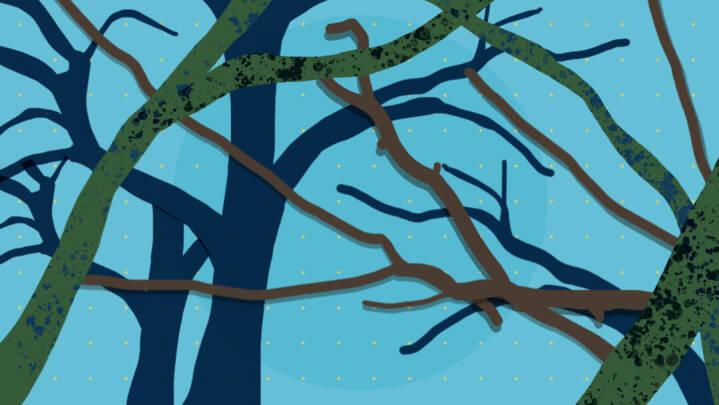 Hvad er vild natur?