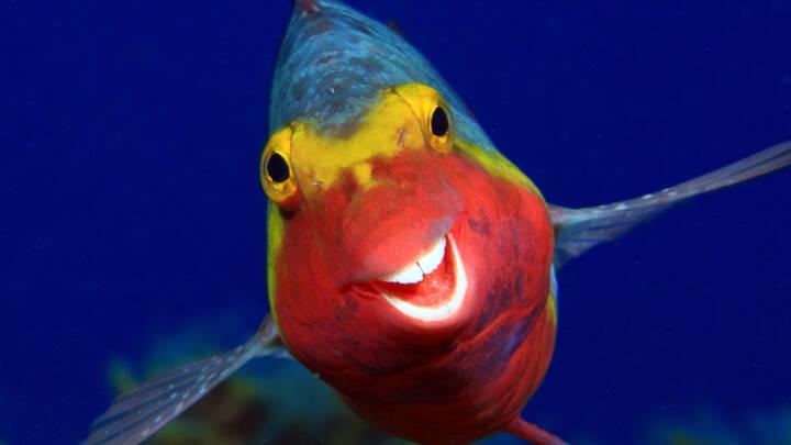 En skildpadde-fuckfinger og en kriminel isfugl: Her er syv af årets sjoveste naturbilleder