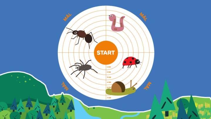 Lav et insektvæddeløb