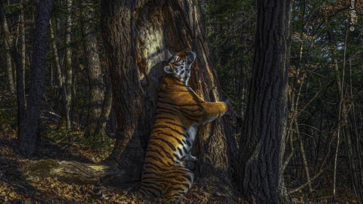 Verdens bedste naturbilleder er kåret: Her er 8 af de mest spektakulære