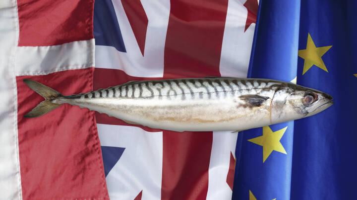 Case: Fiskeri og brexit